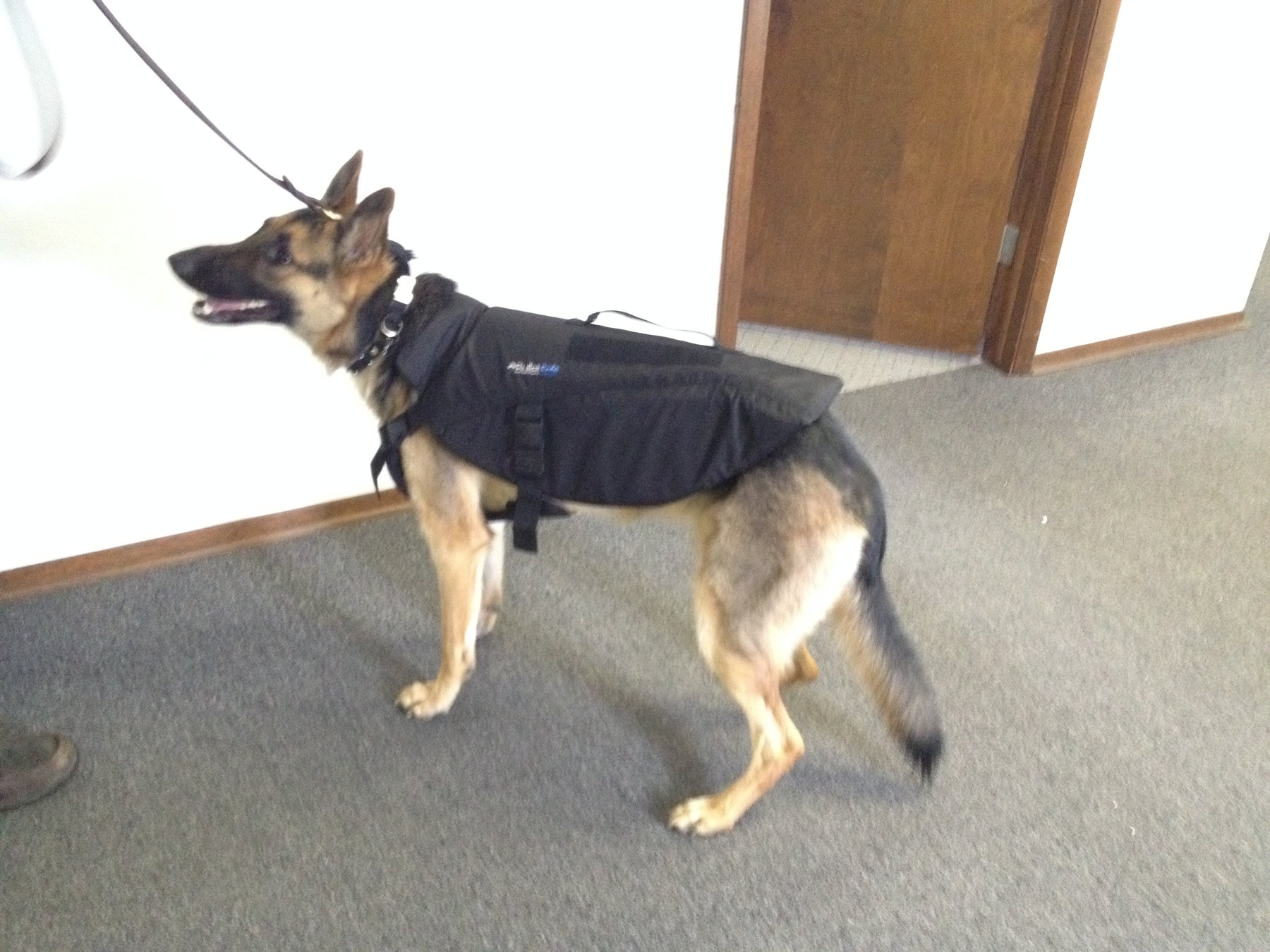 A dog wearing a bulletproof vest beside an open door