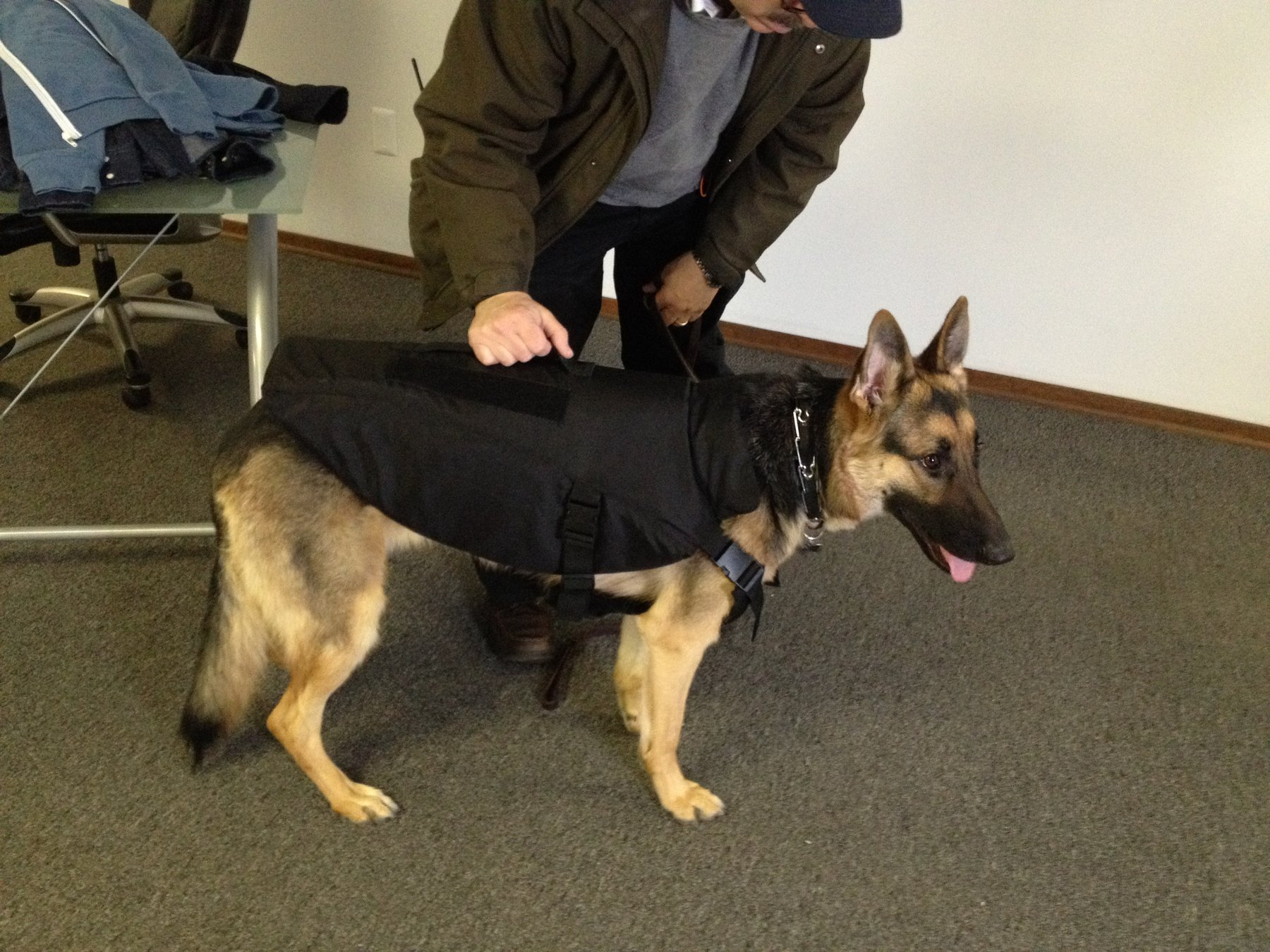 A man looking at a dog that's wearing a bulletproof vest